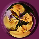 Pansy in the globe by capney