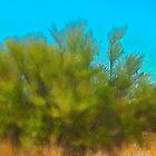 Lido Tree No.2 by Scott Evers