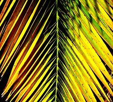 Bright palm leaf in sunlight by Amanda Spencer