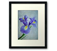 Pretty Blue  Framed Print