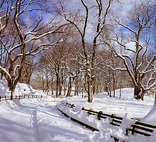 NYC Blizzard - Central Park by Alberto  DeJesus