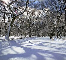 Winter Wonderland by Alberto  DeJesus