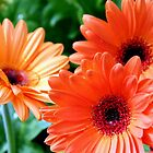 Orange You Glad It&#x27;s Spring by Betty Northcutt