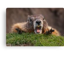 Marmot Surprise Canvas Print
