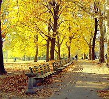 Autumn Afternoon in Central Park  by Alberto  DeJesus
