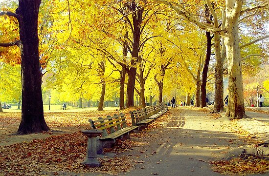 Autumn Afternoon in Central Park  by Alberto  DeJesus
