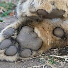 Killer Paws by Michael  Moss