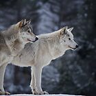Grey Wolves by Justin Atkins