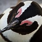{ penguin headshot } by Brooke Reynolds