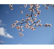 blossoms of Kern Photographic Print