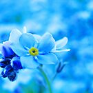 Blue World - Forget-me-not by Marina Herceg