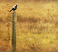 Magpie by Margi