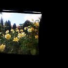 TTV Image ( Through The Viewfinder)# 4 UWA Cards by delta58