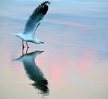 Seagull Stretching  by Jillian Merlot