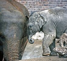 Mother and Baby Elephants #1 - Copenhagen Zoo 1986 by David J Dionne