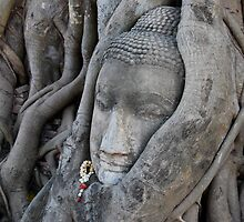 ancient buddha, ayuthaya, thailand by laurence nelson