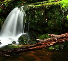 Small waterfall of feeder river for the Narcissus River on Overland Track , Tasmania , Australia by phillip wise
