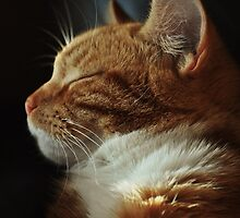 Purrrfectly peaceful by Trudie-A-Wilson
