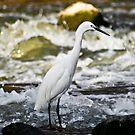 Little Egret - In Breeding Plumage by RatManDude