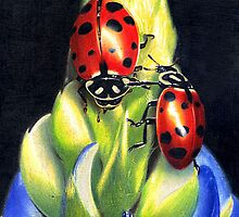 Coccinelle by vegoya
