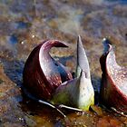 skunk cabbage by Roslyn Lunetta