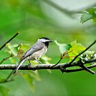 My Little Chickadee by Joe Jennelle