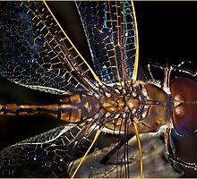 Dragonfly 1 by wildrider58