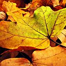 Autumn dream by Marina Herceg