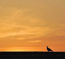 Pigeon Sunset. by relayer51