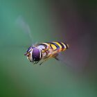 HoverFly2 by Dustinit