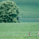 Hares in the landscape by Yves Roumazeilles