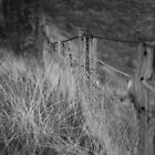 Fenced In  by Ladedadeda