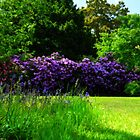 Rhododendron Dell Kew Gardens  by John Hare