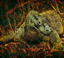 Komodo Dragon by Chris Lord