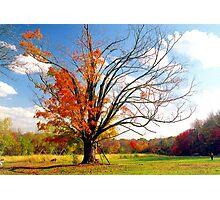 The Gina Tree Photographic Print
