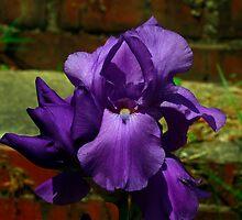 Purple Majesty by Brenda Burnett