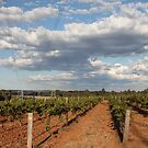 Vineyard at Hunter Valley, NSW, Australia by mensoart
