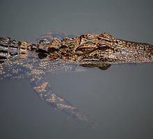 Gator by Paulette1021