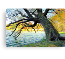 Autumn in New York's Central Park  Canvas Print