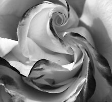 The Heart of a Rose, Black & White by Barbara  Brown