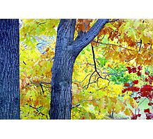 Autumn Leaves in Central Park  Photographic Print