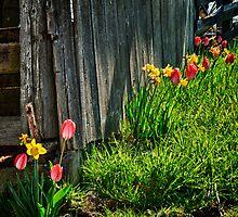 Spring Flowers by Mari  Wirta