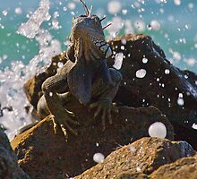 Iguana Lizard - Aruba, Caribbean by Simon Hills