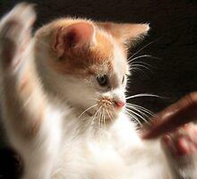 No touchee !!! by SarahTrangmar