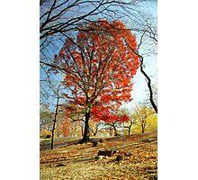 Red Autumn Tree Photographic Print
