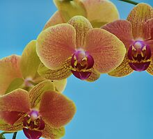 Cascading Orchids by Nicole Jeffery