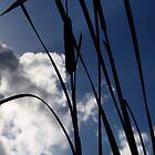 Cattail Plant Silhouette by Nicole Jeffery