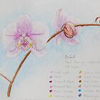 Orchid Sketch by Geraldine M Leahy