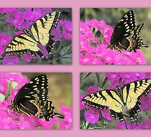 Swallowtail Visits, Collage by DottieDees