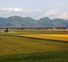 Skagit Valley by Olga Zvereva